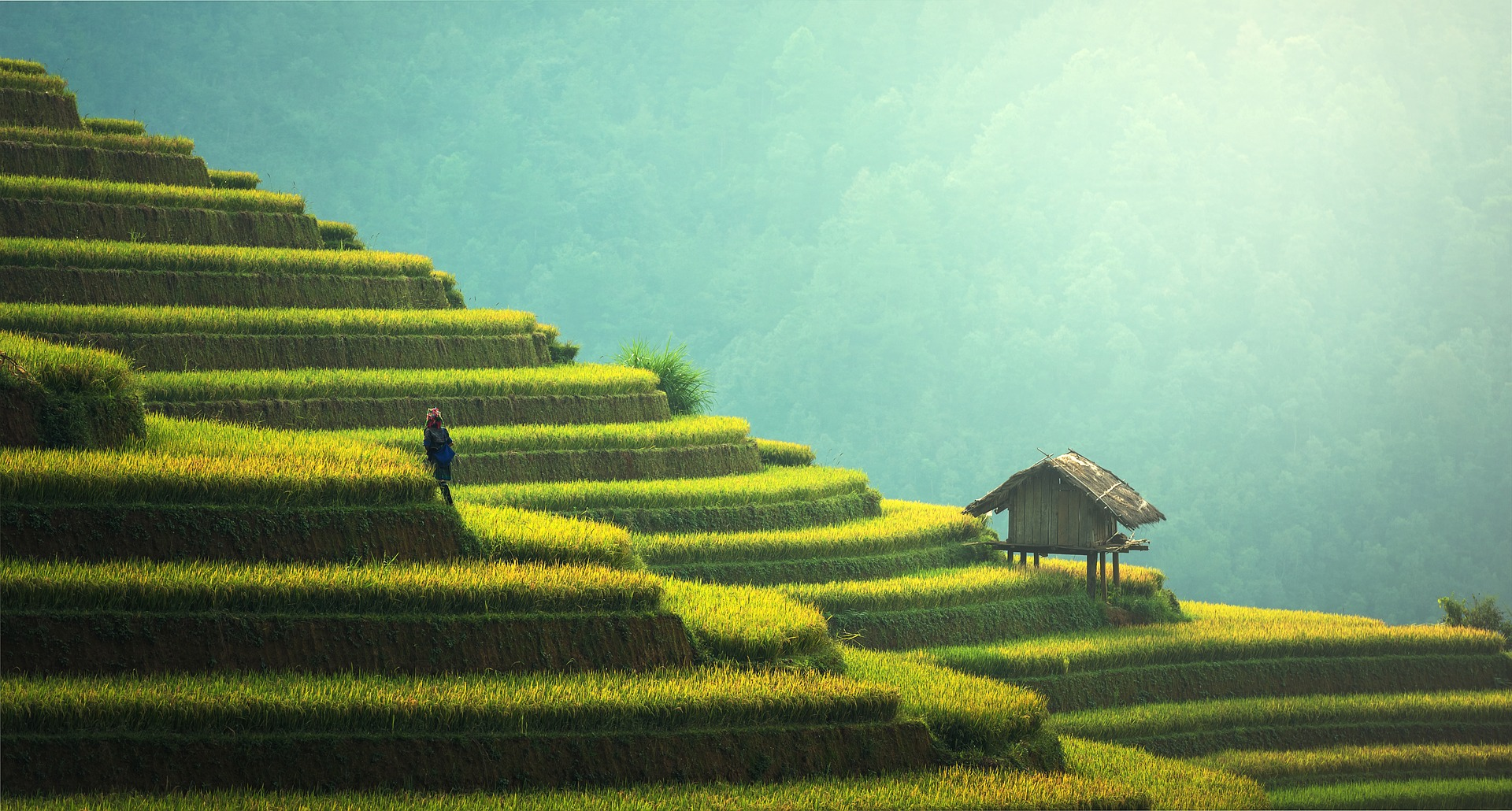 Man tending terraced rice paddies